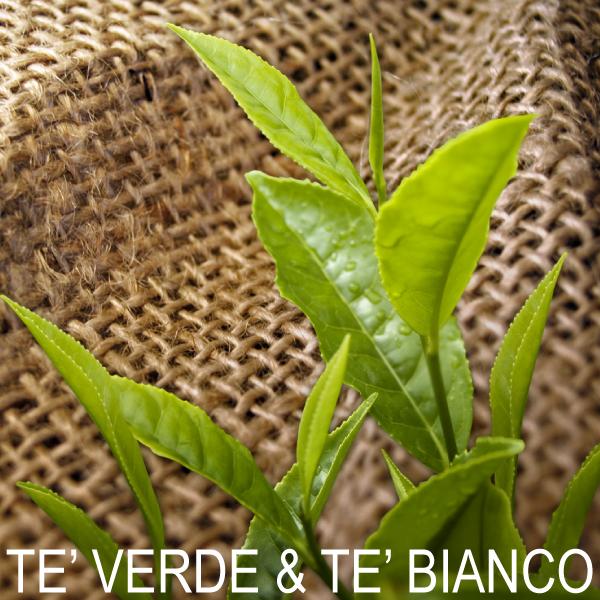 Tè Verde e Bianco Immuno